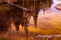 A Moose River Pond #6181